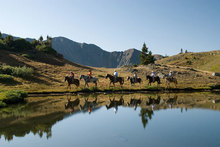 Summit County by Horseback: A Great Riding Adventure