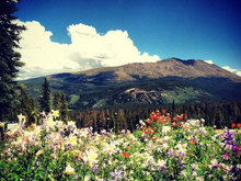 Wildflower Wonders: A Guide to Colorado's Best Flowers