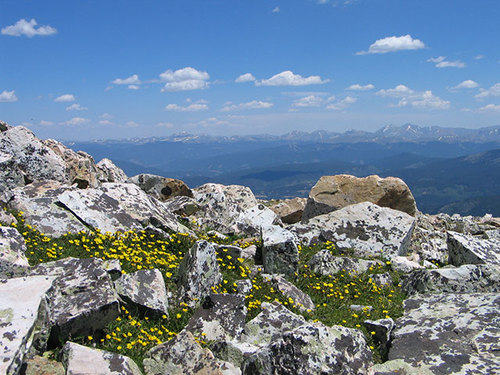 Quandary Peak-wildflowers