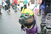 The Dog Days of Frisco, Colorado: Celebrate Mardi Gras & Valentine's Day with Your Furry Friend